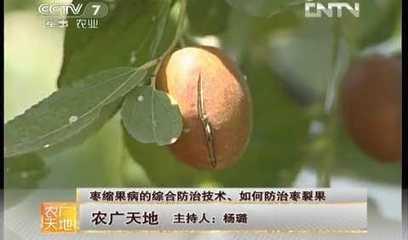 中央电视台-《农广天地》 枣缩果病的综合防治技术、如何防治枣裂果