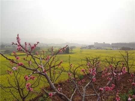 【水果之乡】春暖花开,美丽的荣发村!-四川省-荣发美景-荣发村 第2张