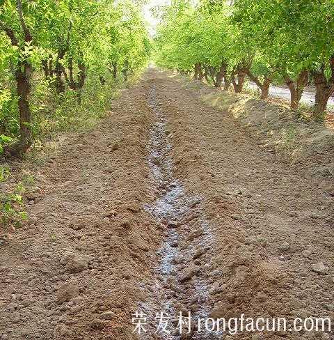 合理施肥促进丰产,红枣种植技术-农业技术-实用技术-荣发村 第2张