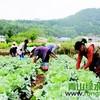 【魏城新闻】现实版QQ农场落户魏城