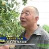 【视频】找准定位专注发展,绵阳电视台荣发大枣专题报道