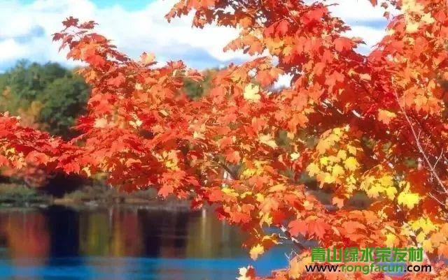 绵阳市区最近的红叶观赏点!我在游仙魏城等你哦~~--魏城新闻-荣发村 第20张