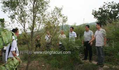 游仙区副区长肖龙明到荣发村调研大枣产业发展